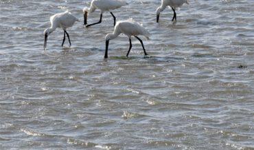 Op Terschelling, langs de waddendijk, bij  Striep of Seerijp